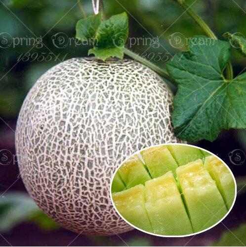 Hot Sale 50pcs/bag cantaloupe melon seeds sowing vegetable seeds fruit seeds planting sweet crispy balcony plant home garden