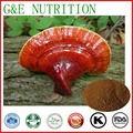 ISO Manufacturer supply hight quality wild Ganoderma Lucidum Extract 1000g