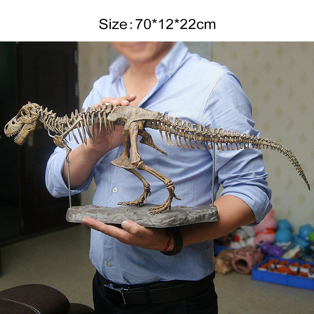 70cm Large Dinosaur Fossil Skull Toys Skeleton Model Building Kit Tyrannosaurus Rex Assembling Dinosaurs Model Decoration Toys