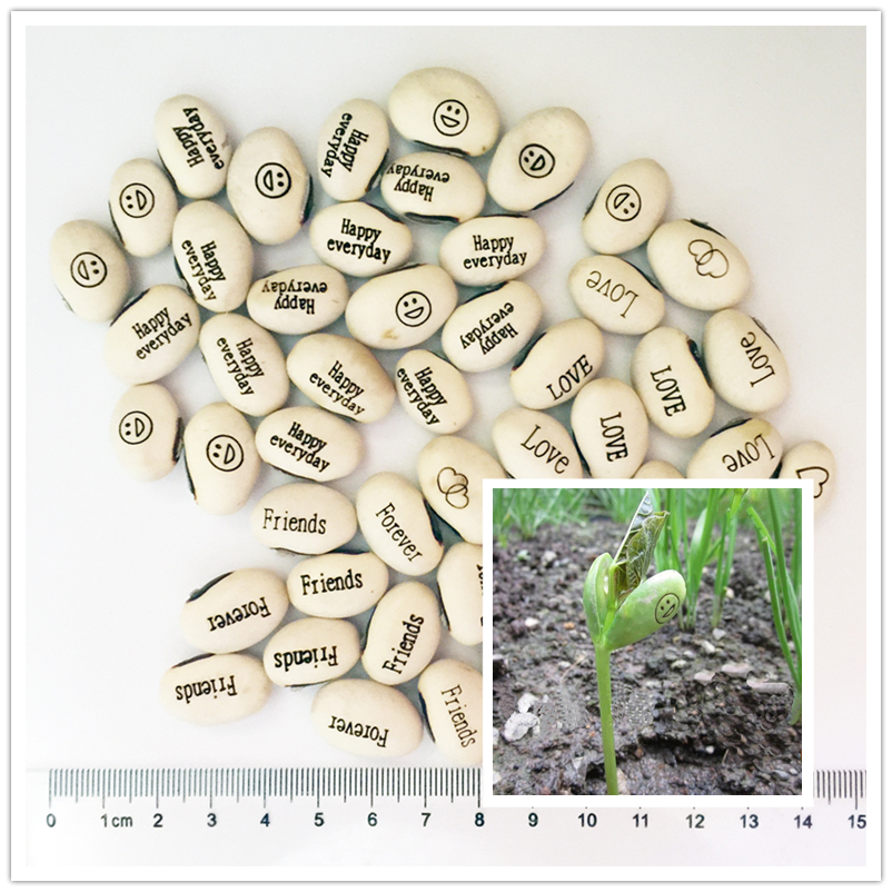 5-10pcs White LOVE Magic Beans Seeds Bonsai Plants Gift Plant Growing Message Word Happy Office Home, Mixed Sent Free Shipping