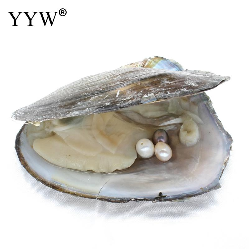 6-7mm Vacuum-pack Oyster Freshwater Pearls Mussel Shell with Pearl Inside Dyed Beads White Pink Purple Pearl Mysterious Gift