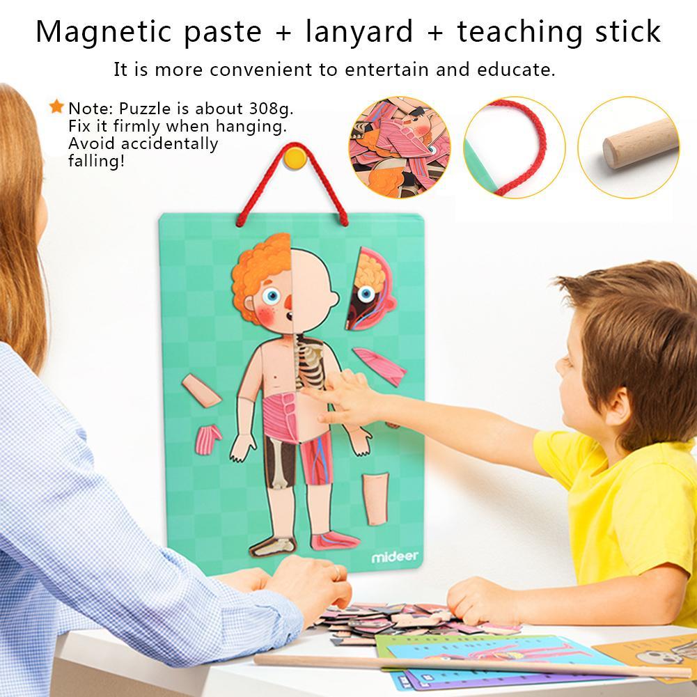 Jouets éducatifs d'apprentissage précoce pour enfants Structure du corps humain magnétique Puzzle cognitif 4 couches pour garçons filles maternelle