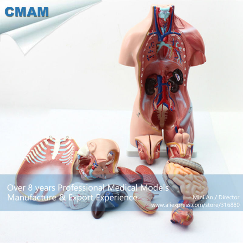 12021 CMAM-TORSO10 Bisexual Torso 45cm High 23 Parts,Female face with open back,Human Anatomical Model,Education Model