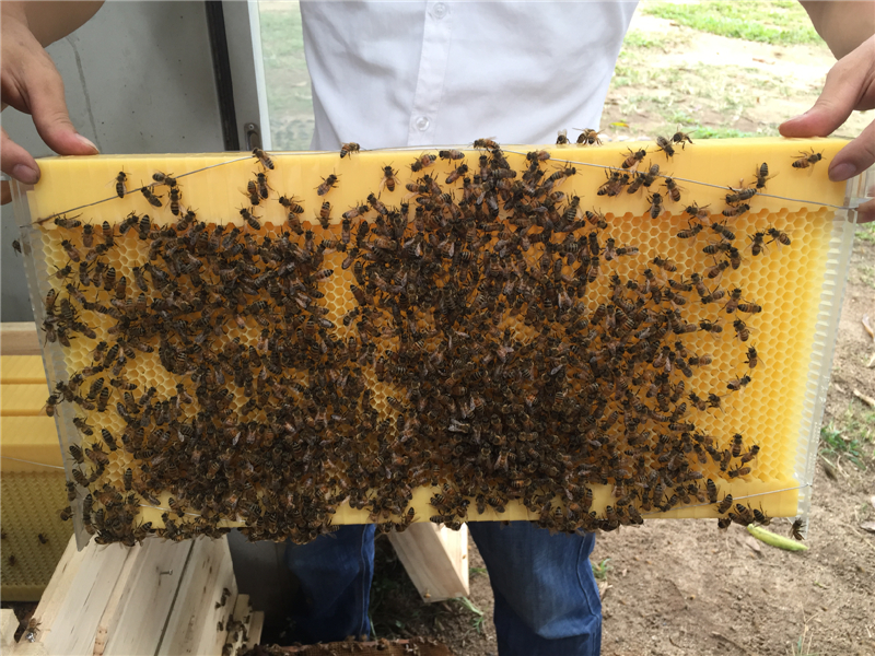 7 pcs Automatic honey flow bee hive frames for Beekeeping tools home ...