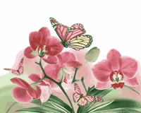 MaHuaf I699 Pink Moth Orchid And Butterfly DIY Painting By Numbers Flowers Hand Painted Canvas Oil