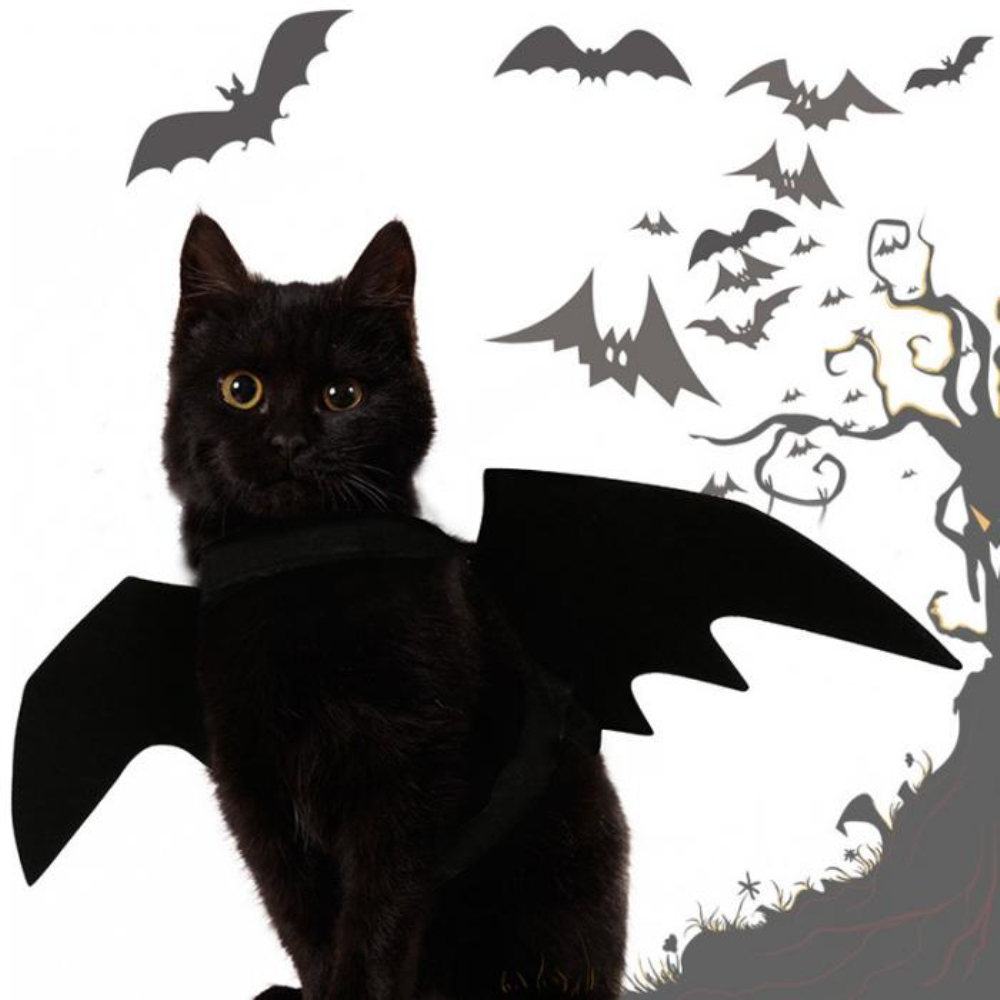 Halloween Cat Bat Costume 4