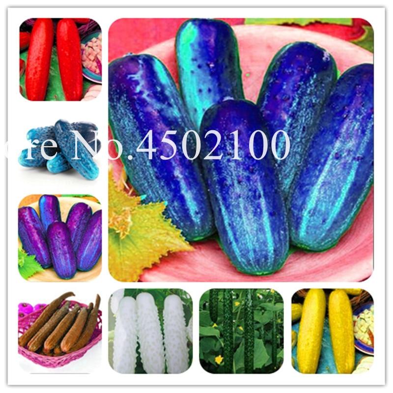 Tuinplant zaden herfst meloenen gemengde komkommers bonsai tuin huis tuin planten kan verfrissend fruit 50 pcs.