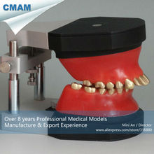 CMAM-DT2010 Dentist Orthodontic Model Training Wax Model with Various Type Wax