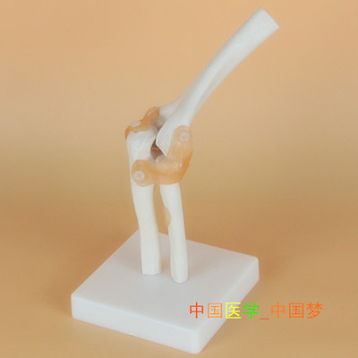 online get cheap elbow joint model -aliexpress | alibaba group, Skeleton
