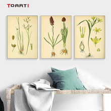 Modern wall art picture canvas poster and print Vintage Botanical illustrations floral murals living room decor classical charts