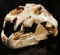 Simulation Animal Polar Bear Skull Resin Crafts Specimen Medical Teaching Scary Home Decoration Skeleton Model Aquarium Decor
