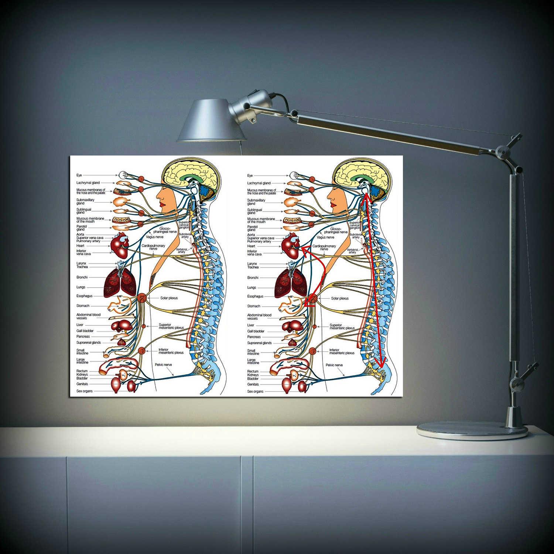 Человеческая наука человеческое тело органы медицинские знания Холст плакат печать на заказ Декор больница плакат Настенные картины образование