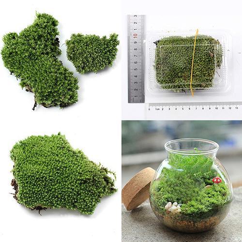 Artificial Green Grass Moss Plant Ornament Miniature Artificial Plants Moss micro landscape accessories Home Party garden Decora