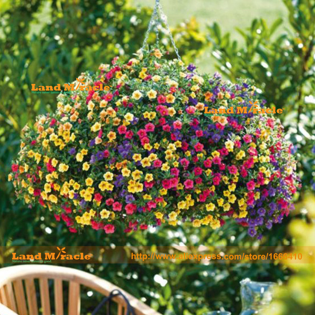Hanging Mixed Petunia Hybrida Seeds 200 Seedspack Very Beautiful