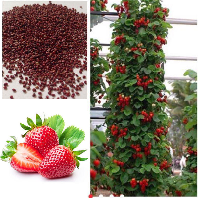 Online Buy Wholesale basil seeds bulk from China basil seeds bulk