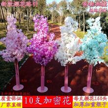 Wedding Cherry Blossom Road Guide Projects Background Arch Frame Tree Tieyi