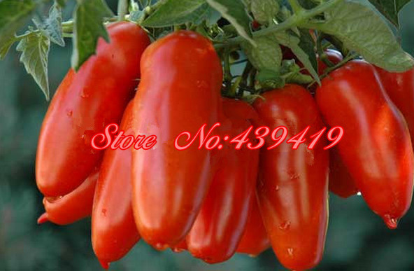Tomato Seeds -San Marzano Heirloom Open Pollinated for home planting