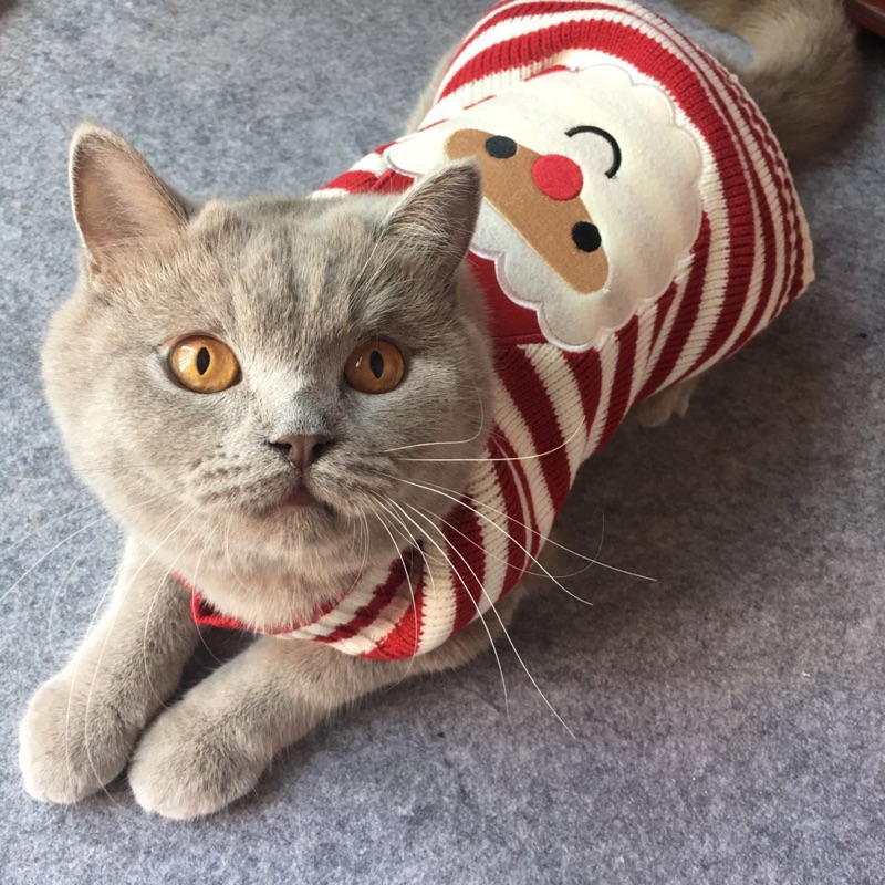 Aliexpress.com : Buy 8 Color Christmas Pet Cat Sweater For Cats ...