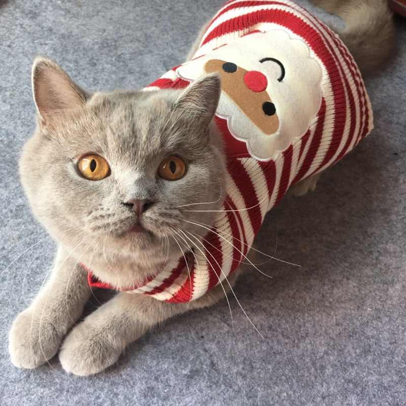 Kitten Christmas Sweater.8 Color Christmas Pet Cat Sweater For Cats Halloween Clothes For Small Dogs Cats Kedi Kitten Pullover Santa Clothing Outfits Xxs