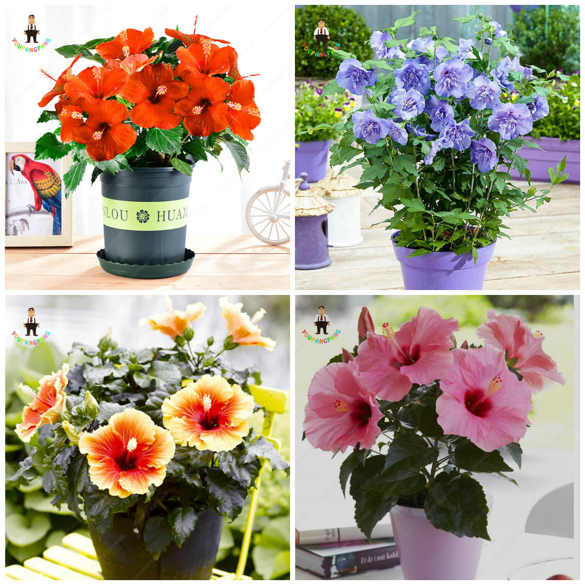 Different kinds of japanese style hibiscus flower diy outdoor garden different kinds of japanese style hibiscus flower diy outdoor garden and potted plants easy to grow flowers 100pcs in bonsai from home garden on izmirmasajfo