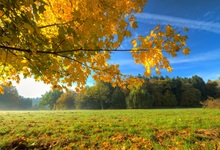 Laeacco Rural Grassland Maple Tree Forest Sunshine Autumn Scenic Photographic Backgrounds Photography Backdrops For Photo Studio