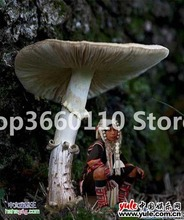 100 Pcs Seedsplants big Giant Mushroom bonsai Delicious Green Vegetable Organic can eat in Garden and Courtyard
