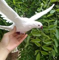 new simulation pigeons toy  flying white simulation dove doll bird gift about 36x28cm
