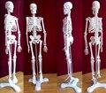 45 cm esqueleto humano modelo médico torso esqueleto anatomia dental anatômico anatomia do cérebro Explodiu crânio modelo manequim de enfermagem