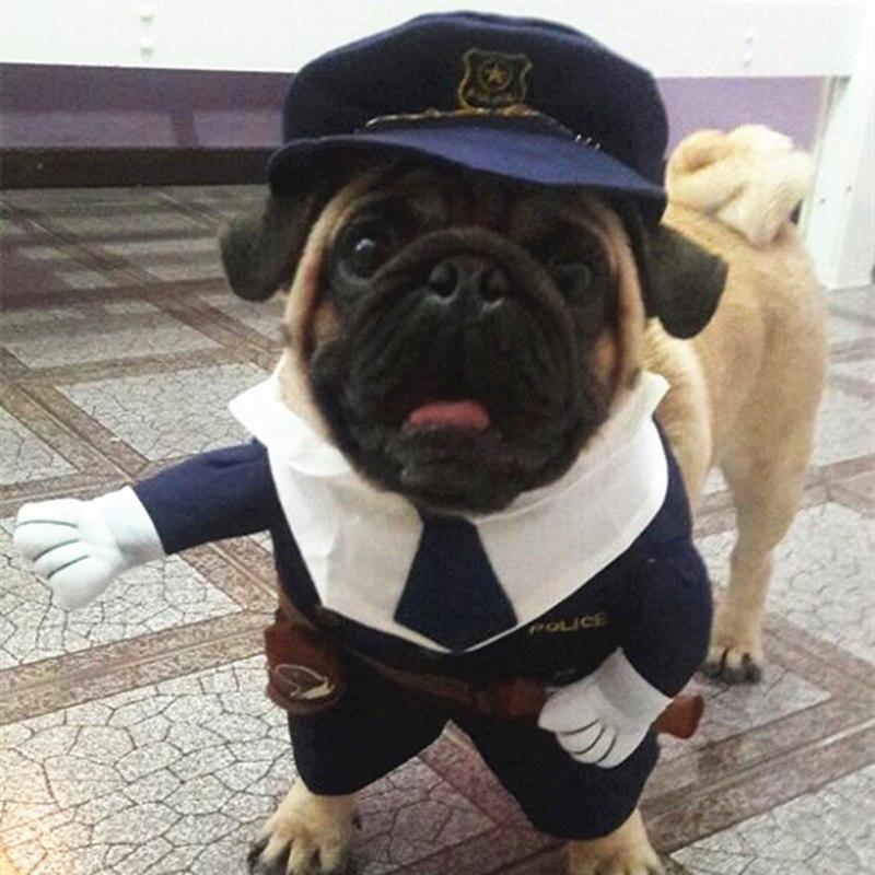 удавчики милые картинки мопса в костюме бизнесмена его успокоил сказал