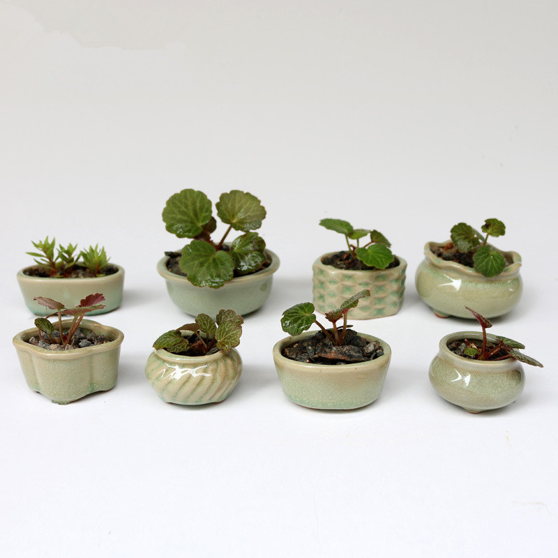 8pcs set zakka home ceramic micro garden mini flowerpots. Black Bedroom Furniture Sets. Home Design Ideas