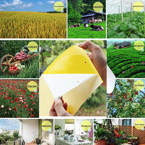 Image 1 - 10Pcs Strong Flies Traps Bugs Sticky Board Catching Aphid Insects Pest Killer  convenient and  practical Household HOT Sale
