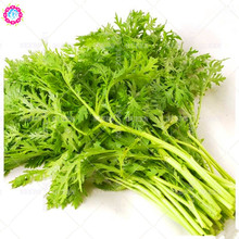 100pcs organic Crown daisy seeds Real Non-GMO Chrysanthemum coronarium vegetable planting for spring farm home garden supplies