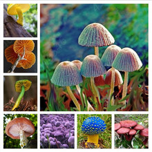 Hot sales! 100 pcs/bag mixed Mushroom bonsai Funny Succlent Plant Amazing Edible Health Vegetable For Happy Farm Free Shipping(China)