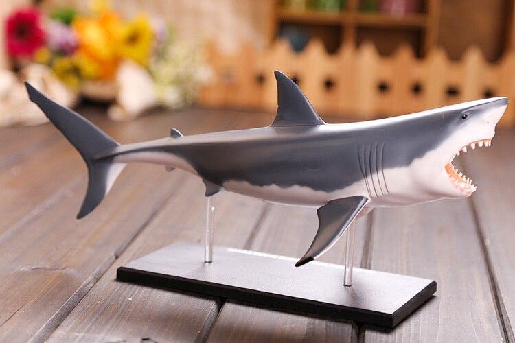 Dental lab Dentist Great White Shark Anatomy Medical skull model ...