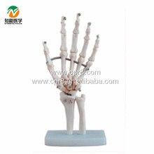 BIX-A1020 Life-Size Hand Joint Skeleton Model  G133
