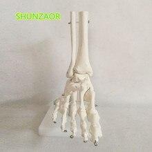 1:1 в натуральную величину, размер в натуральную величину, анатомическая модель сустава правой стопы, сустава голеностопного сустава, хирургическая модель для рук и ног