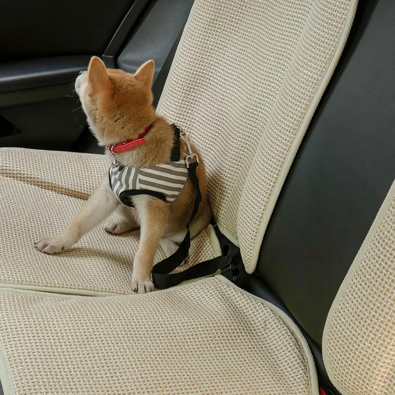 attache voiture pour chien