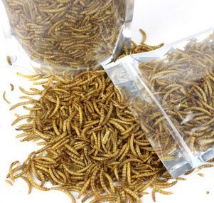 Dried Mealworms for Reptile Turtle Hamster 1