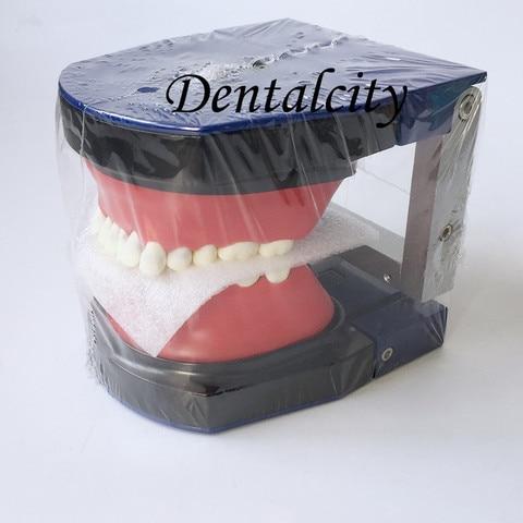 alta qualidade dental m8017 typodon dentes modelo ortodontico steelteeth modelo