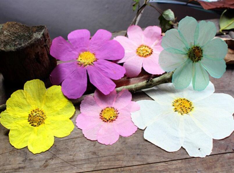 60 шт. нажатии сушеные Sims Азалия цветы для Свадебная вечеринка дома кулон Цепочки и ожерелья Ювелирные изделия Чехол для телефона Craft DIY Интим…