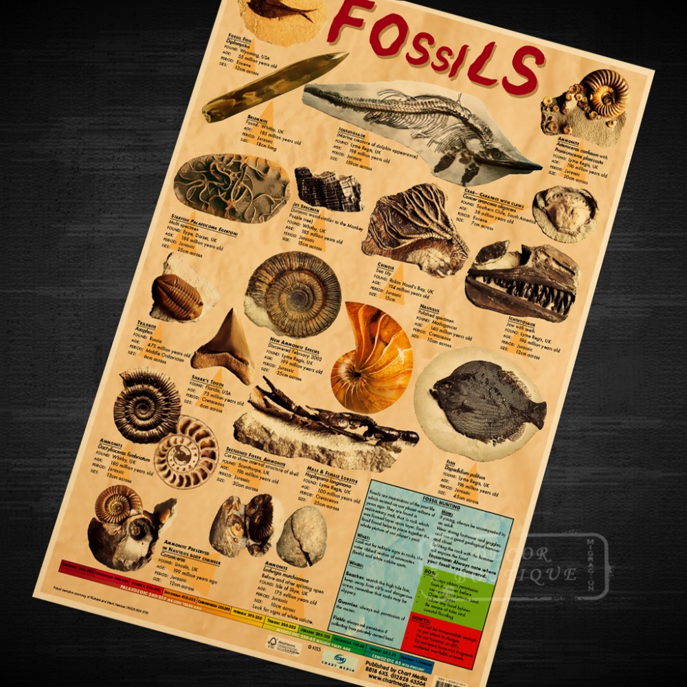 Fossils Educational Chart Kids Poster Decorative Diy Wall