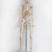 45 см модель скелета человека Специального медицинские украшения Семья персонализированные Хэллоуин декоративные статуэтки scheletro umano