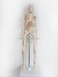 45 cm esqueleto humano modelo médico Especial decoração Da Família personalizado Dia Das Bruxas Figuras decorativas scheletro umano