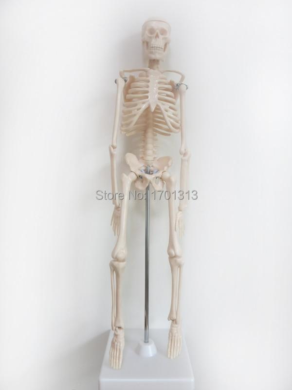 popular plastic human skeleton-buy cheap plastic human skeleton, Skeleton