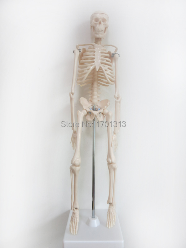 45cm human skeleton model Special medical decoration Family personalized Halloween decorative Figurines scheletro umano 3 1 human anatomical kidney structure dissection organ medical teach model school hospital hi q