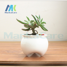 2 Pcs Tooth Shape Pastoral Style White Ceramic plant Pots Teeth type Flowerpot Flower Garden Pots Dental gift Free shipping