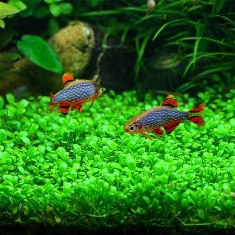 Aquarium Plant Zaden Glossostigma Hemianthus Callitrichoides Gemakkelijk Groeiende Water Plant Grass Fish Tank Landschap Ornament Decor