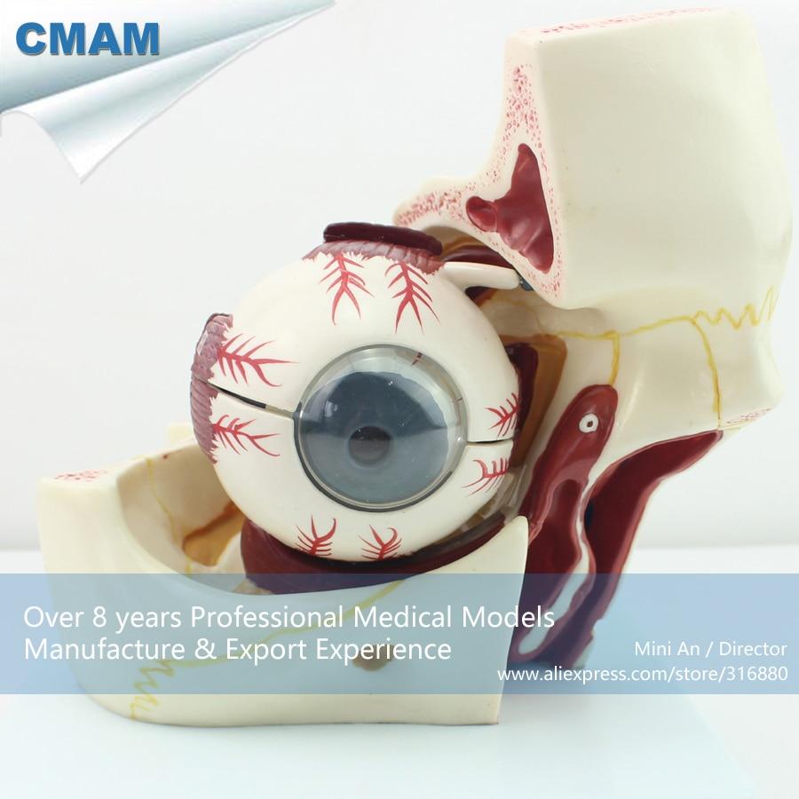 12400 CMAM BRAIN03 medio humano cabeza craneal y nervios autonómicos ...