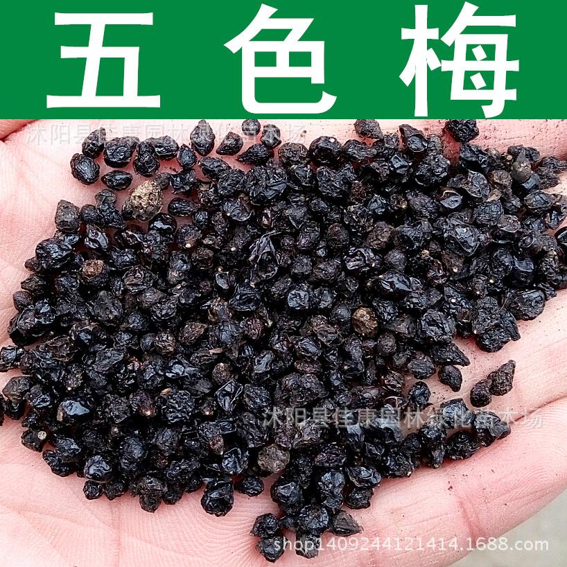 как выглядят семена гортензии фото