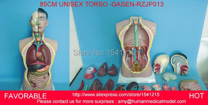 TORSO MODEL,MALE TORSO WITH INTERNAL ORGANS 19 PARTS,ANATOMICAL MODEL,ANATOMY MEDICAL MODEL,85CM ASEXUAL TORSO -GASEN-RZJP013 42cm male 13 torso model torso anatomical model of medical biological teaching aids equipment
